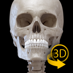 Скелет 3D анатомии на пк