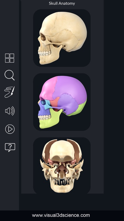 My Skull Anatomy
