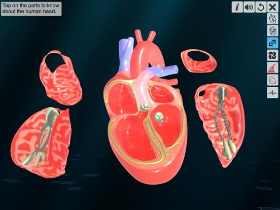 Heart - An incredible pump screenshot 10
