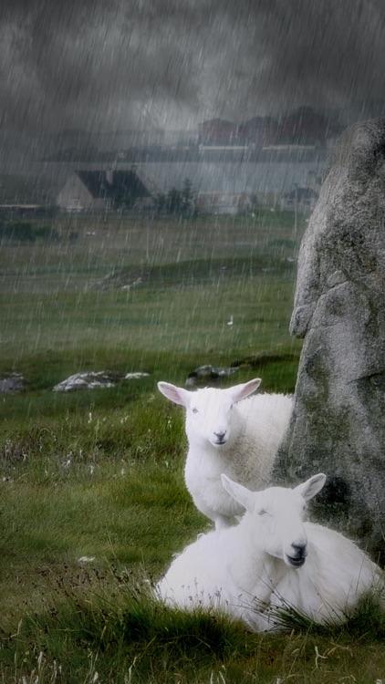 Rainy Daze screenshot-3