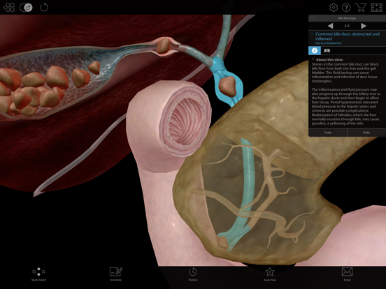 Physiology & Pathology screenshot 15