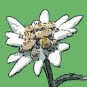 Flora Helvetica Pro français