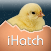 Ihatch Chickens app review