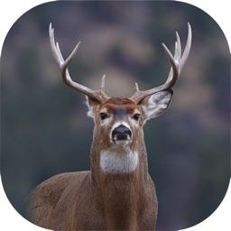 Hunting Camera Pro
