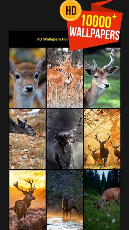 Hd Wallpapers For Deer Hunting By Roman Gavrilin