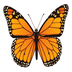 Animated Butterfly Puns - Stickers app