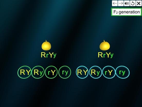Dihybrid cross screenshot 15