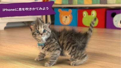 Little Kitten 小さな子猫 - お気に入りの猫のおすすめ画像5