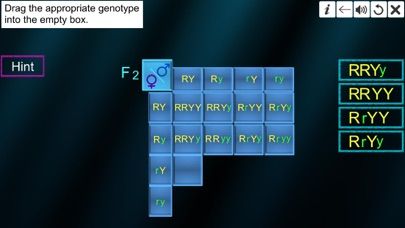 Dihybrid cross screenshot 7