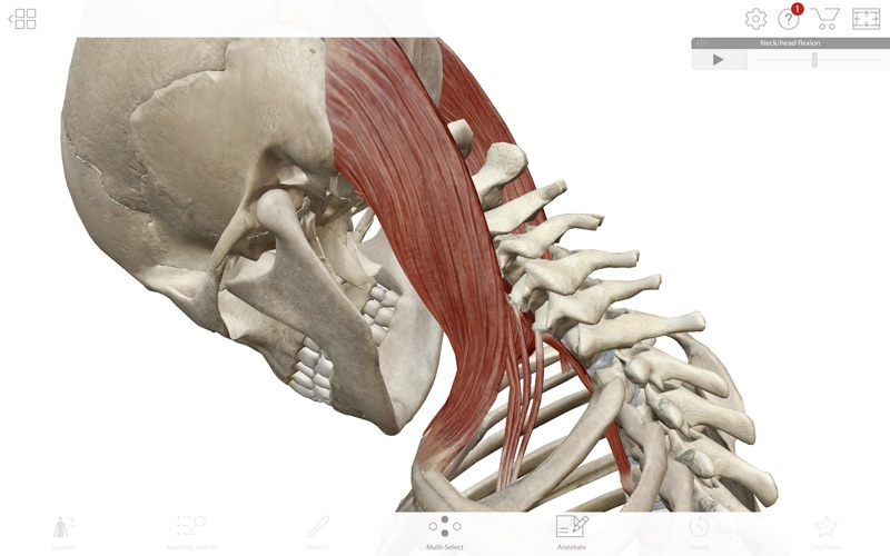 Human Anatomy Atlas 2019 screenshot 7