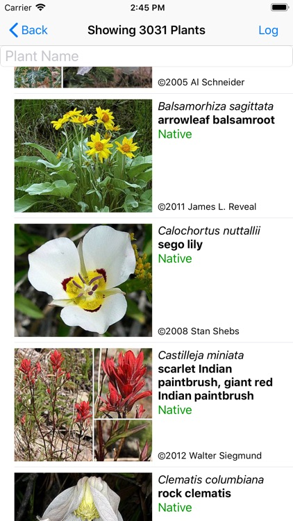 Colorado Wildflower Search by Wildflower Search