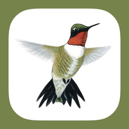 Sibley Guide to Hummingbirds