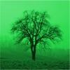 Deciduous trees Reviews