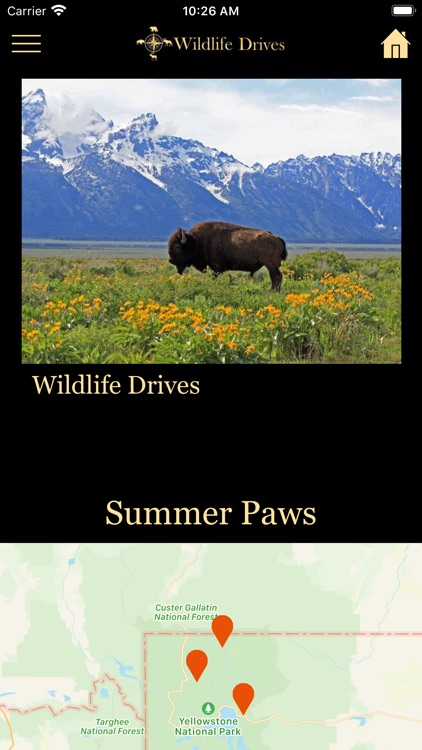 WildlifeDrives-YellowstoneGTNP