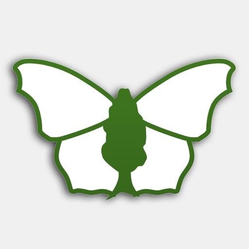 iRecord Butterflies