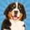 chien simulateur chiot animal