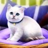 家猫生存模拟器3D