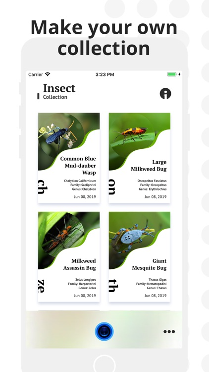 Insect Identification screenshot-2