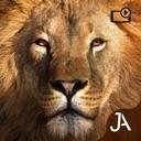 Safari: Evolution