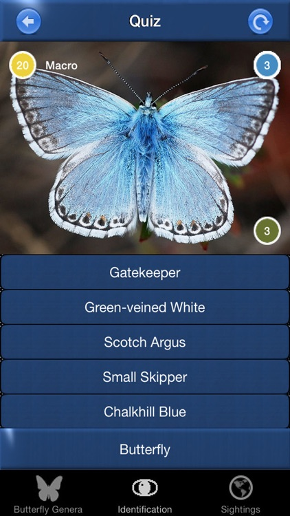 Butterfly Id - UK Field Guide screenshot-3