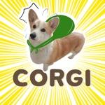 Welsh Corgi's style Part 2