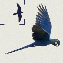 Birds of Brazil