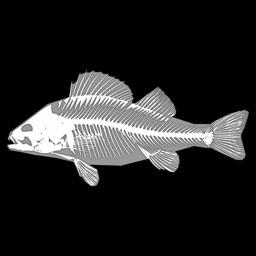 3D Fish Anatomy