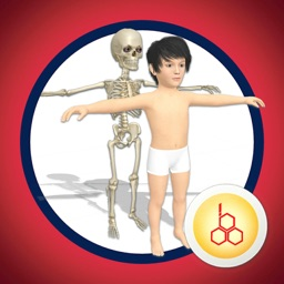 Know our Anatomy by OOBEDU