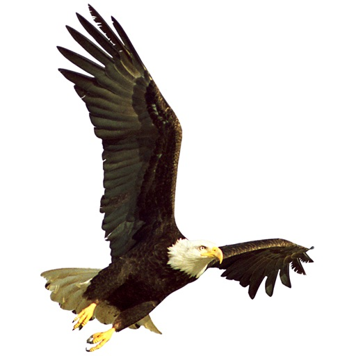 Blue Mountain Eagle News