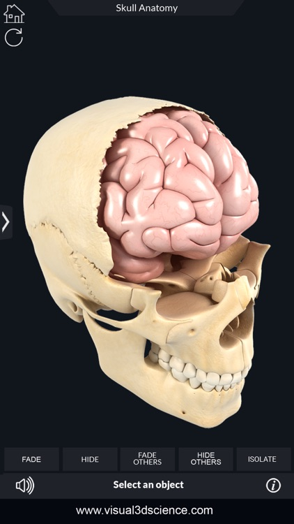 My Skull Anatomy screenshot-4