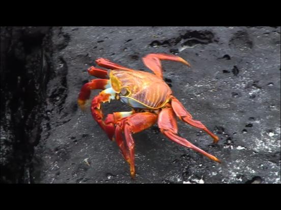 Video Touch - Sea Life screenshot 10