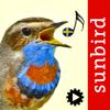 Mullen & Pohland GbR - Fågelsång Id - fåglar bild