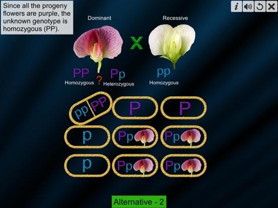Test Cross: pea flower screenshot 11