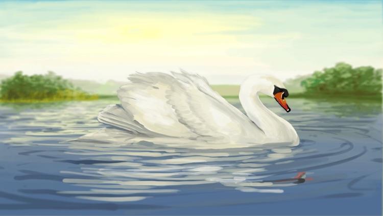 Where Do Swans Sleep?