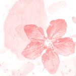 花间集-华美诗词与日本传统色