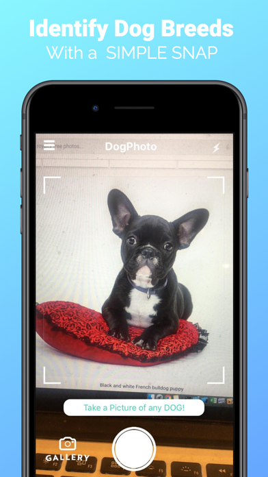 DogPhoto - Dog Breed Scanner screenshot 1