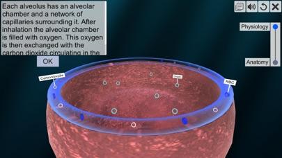 Respiratory system physiology screenshot 6