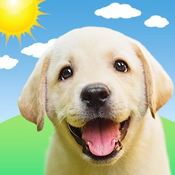 Weather Puppy Forecast Dogs 4