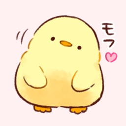 Soft and cute chick