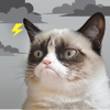 Grumpy Cat's Funny Weather - Weather Creative Inc.