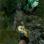 Finding Bigfoot: Monster Hunt