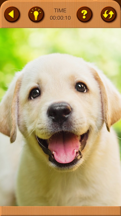 Cute Puppy Jigsaw Puzzle Games screenshot-8