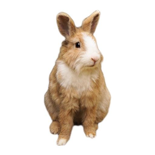 Rabbit photo sticker