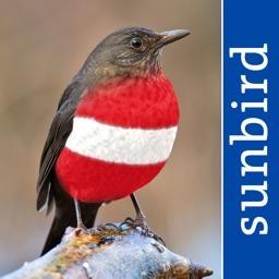 Alle Vögel Österreich