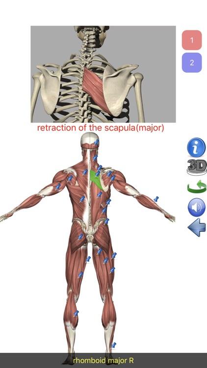 Visual Anatomy Lite screenshot-3