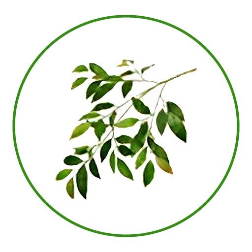 Olive Employee Self Service