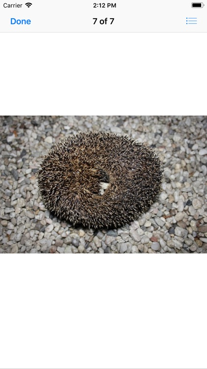 My Hedgehog Stickers screenshot-8