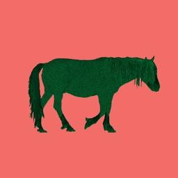 Chincoteague Pony Names