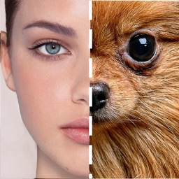 Animal Celebs Lookalike Looky