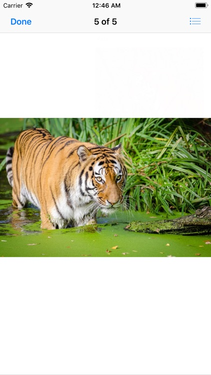 Real Tiger Stickers screenshot-5